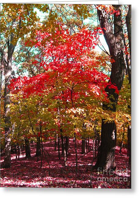 Colorful Woodland Greeting Card