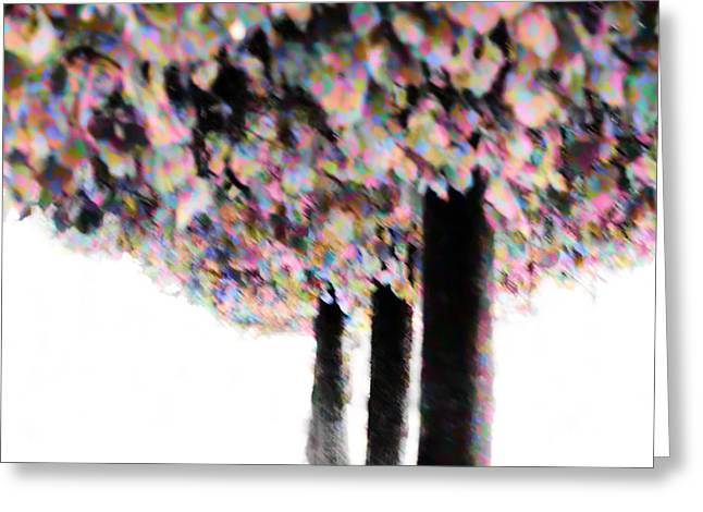 Colorfull Autumn Trees Greeting Card