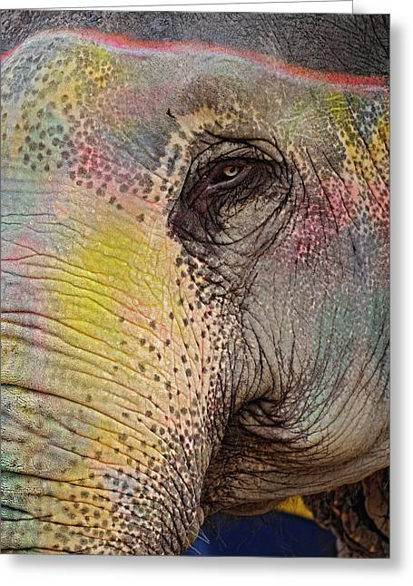 Colorfully Decorated Elephant, Amber Greeting Card