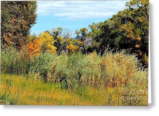 Colors Along The Gunnison Greeting Card by Bob Hislop