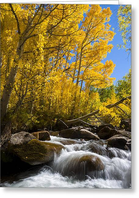 Colors And The Cascades Of South Fork Bishop Creek Greeting Card by Joe Doherty