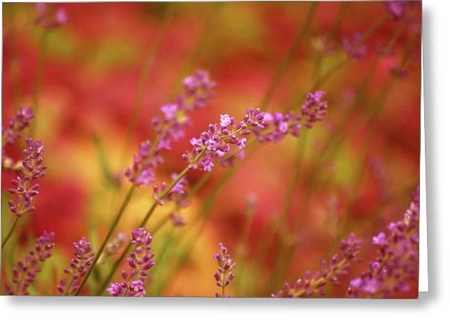 Colors I Love Greeting Card