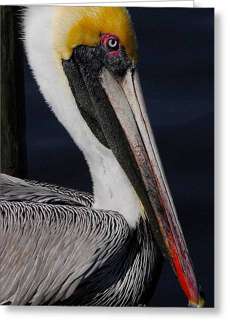 Colors Of A Pelican Greeting Card by Quinn Sedam