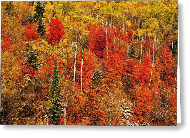 Colors Of Autumn Greeting Card by Greg Norrell