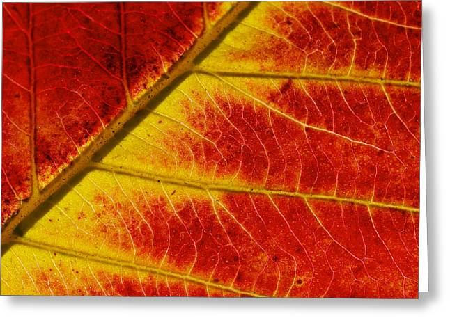Colors Of Autumn Greeting Card by Meir Ezrachi