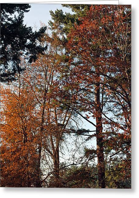 Greeting Card featuring the photograph Colors Of Autumn by Tikvah's Hope