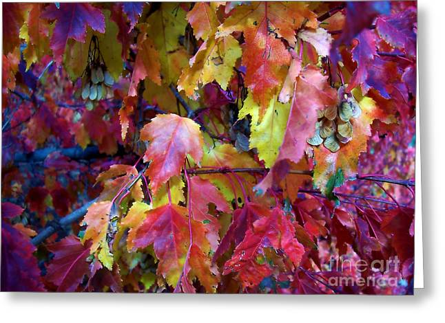 Colors Of Fall Greeting Card by Janice Westerberg