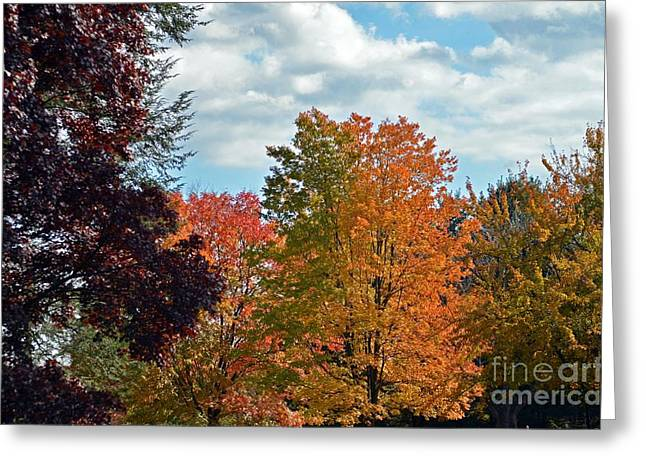 Colors Of Fall Greeting Card by Judy Wolinsky