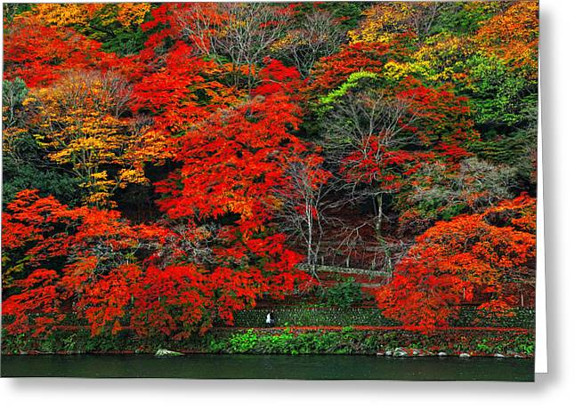 Colors Of Fall Greeting Card by Midori Chan