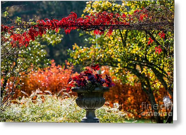 Colors Of Fall Greeting Card by Torbjorn Swenelius