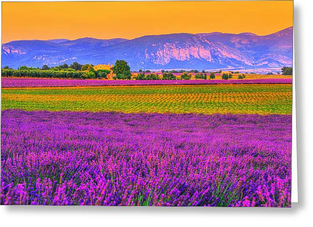 Colors Of Provence Greeting Card by Midori Chan