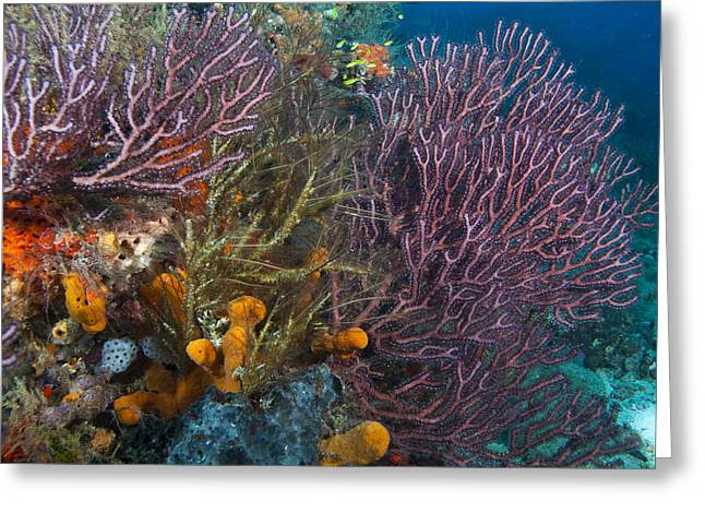 Colors Of Reefs Greeting Card