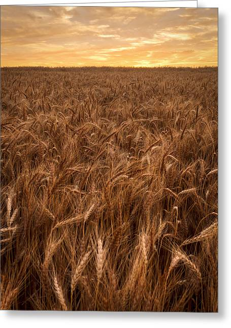 Colors Of Wheat Greeting Card