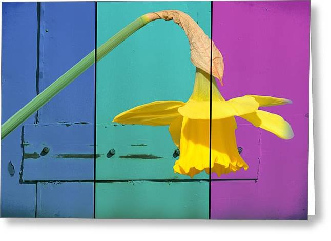 Colour Blocking Spring Greeting Card by Lisa Knechtel