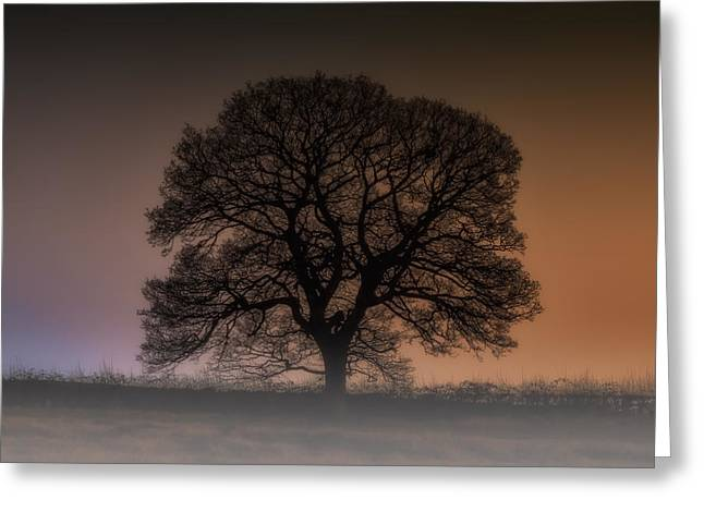 Greeting Card featuring the photograph Colour Tree by Stewart Scott
