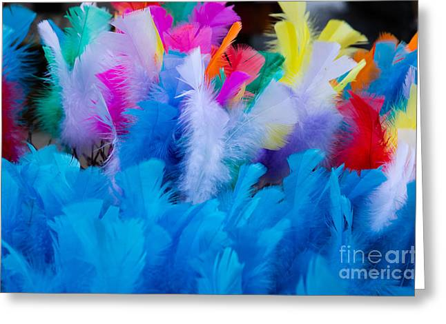 Coloured Easter Feathers Greeting Card