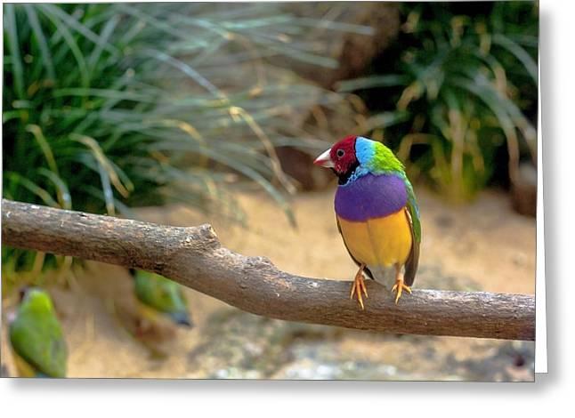 Colourful Bird Greeting Card by Daniel Precht