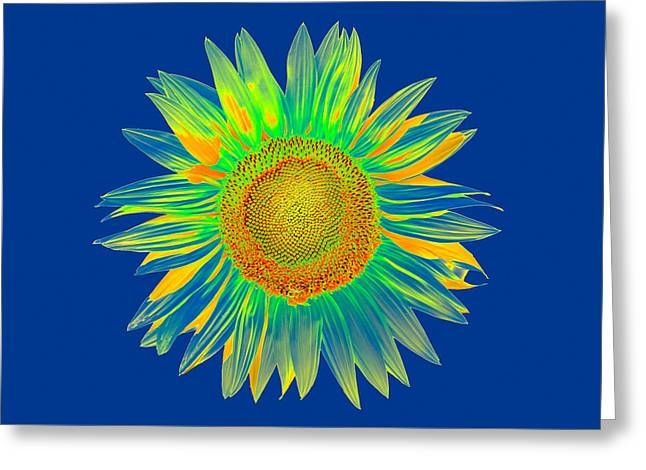 Colourful Sunflower Greeting Card