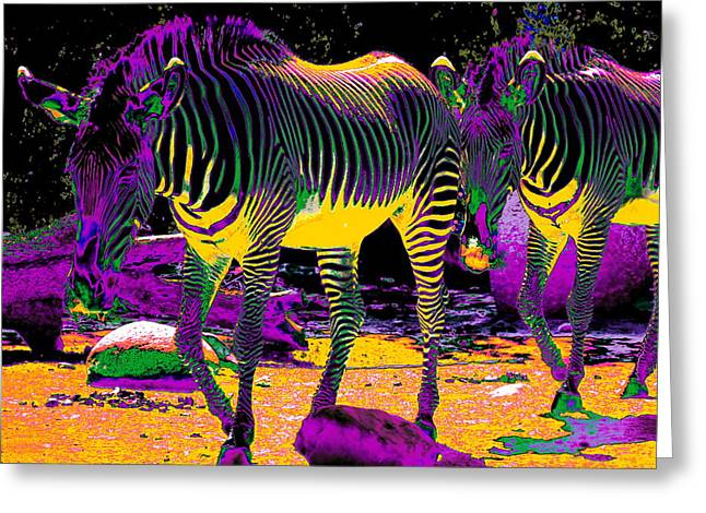 Colourful Zebras  Greeting Card