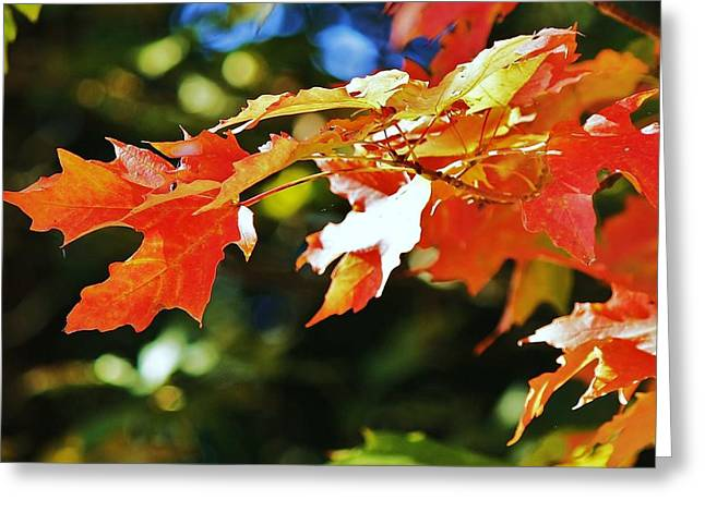Greeting Card featuring the photograph Colours Of Fall by Al Fritz