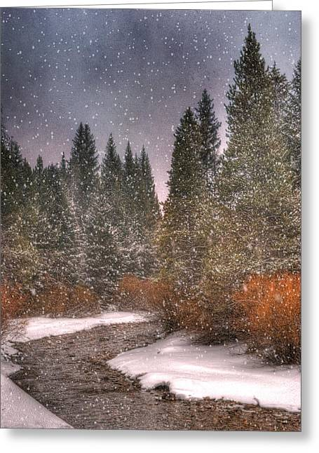 Colours Of Winter Greeting Card