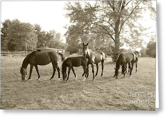 Colt And Family Greeting Card by John Debar