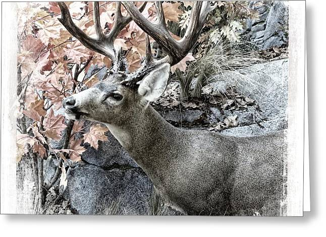 Greeting Card featuring the photograph Columbia Blacktail Deer by Aaron Berg