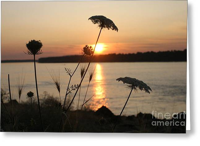 Columbia Gorge Sunset Greeting Card by Cari Gesch