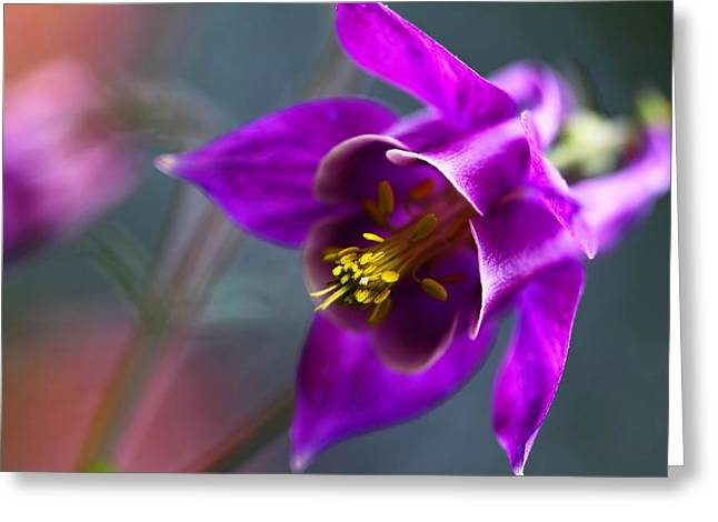 Columbine Abstract Greeting Card by Katherine White