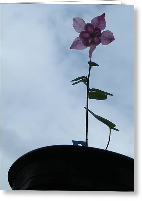 Greeting Card featuring the photograph Columbine Climb by Brian Boyle