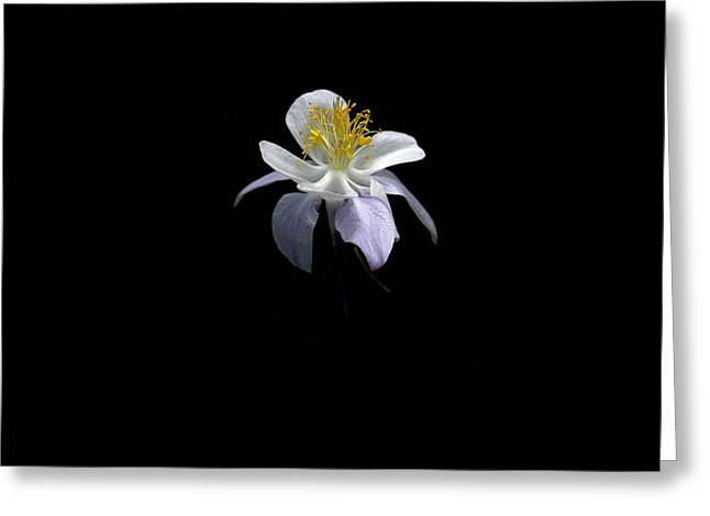 Greeting Card featuring the photograph Columbine by David Andersen