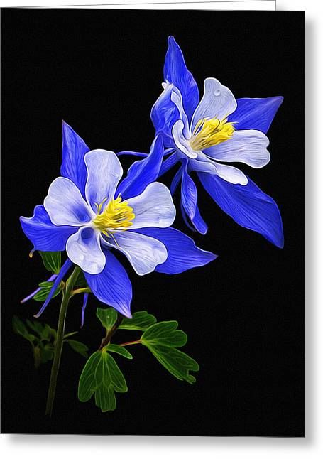 Columbine Duet Greeting Card by Priscilla Burgers