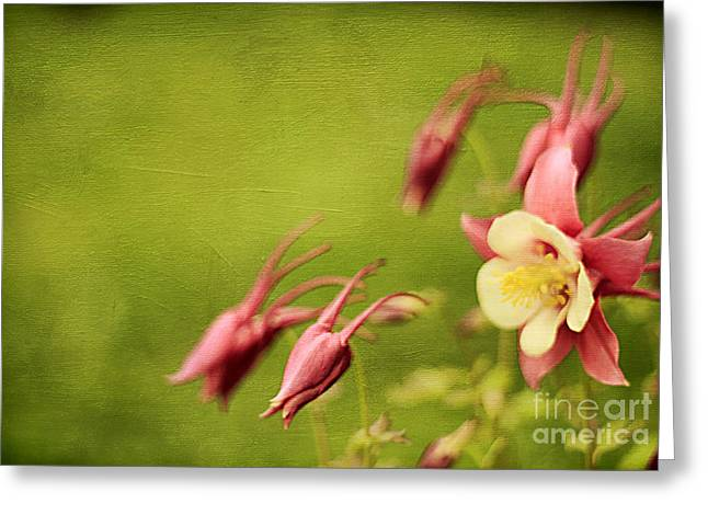 Columbine In Bloom Greeting Card by Darren Fisher