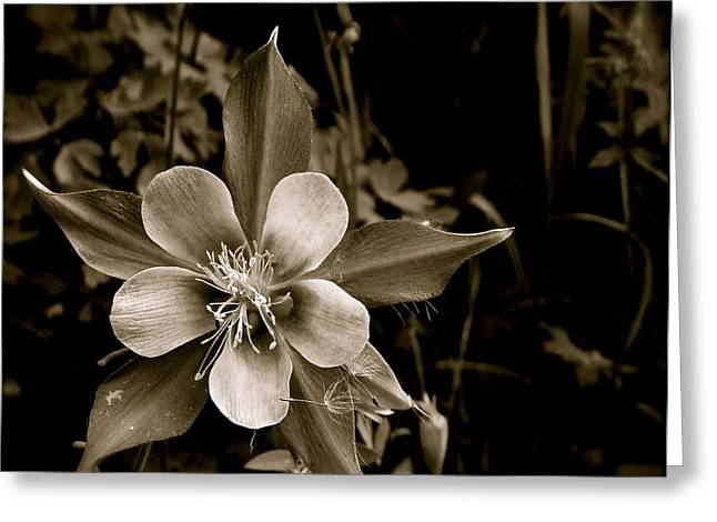 Columbine Greeting Card by Kim Pippinger