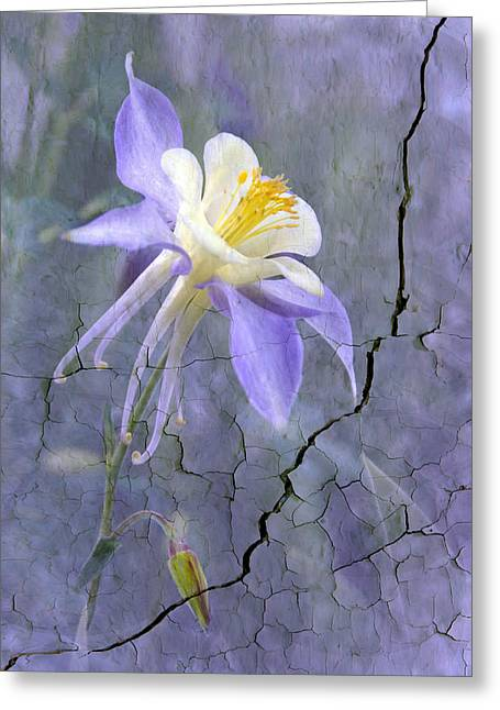 Columbine On Cracked Wall Greeting Card by James Steele