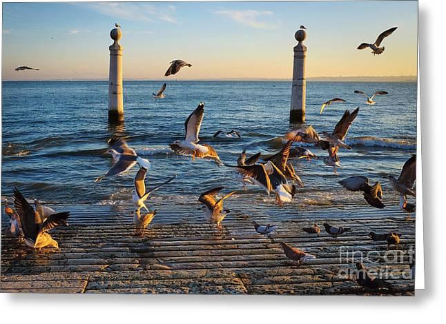 Columns Dock In Lisbon Greeting Card