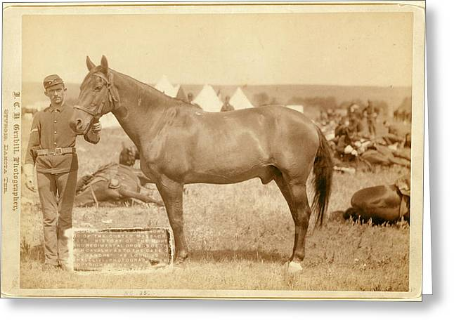 Comanche, The Only Survivor Of The Custer Massacre Greeting Card
