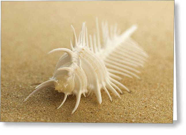 Comb Shell On Sand Greeting Card by Science Photo Library