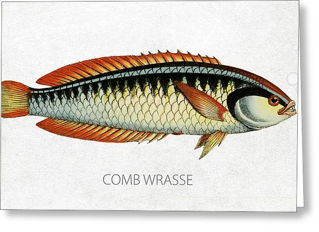Comb Wrasse Greeting Card