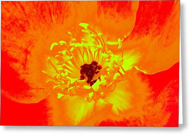Come Closer Rose Greeting Card by Ann Johndro-Collins