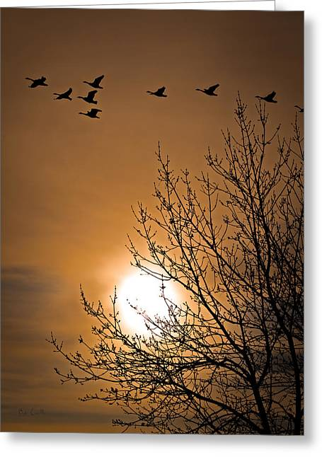 Coming Home In The Spring Greeting Card by Bob Orsillo