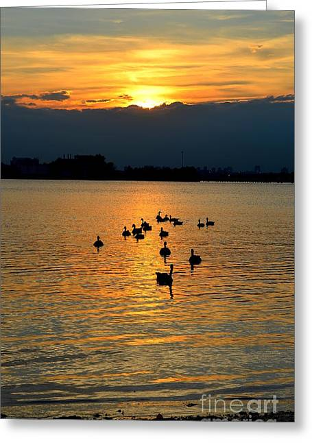 Coming Home Greeting Card by Janet Davaros