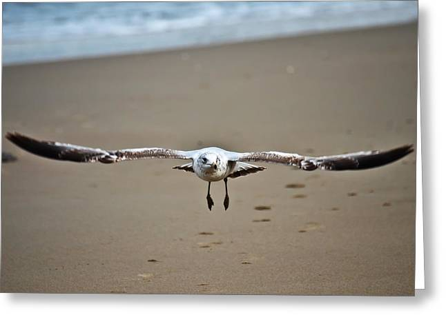 Coming In For A Landing  Greeting Card by Sabrina  Hall
