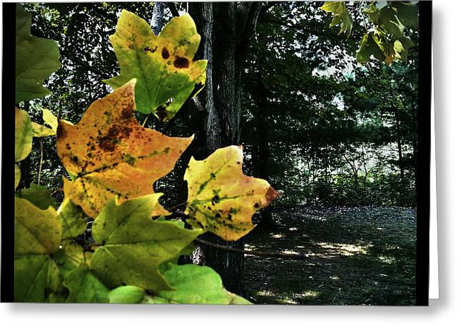 Coming Of Fall Greeting Card