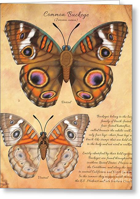 Common Buckeye Butterfly  Greeting Card by Tammy Yee