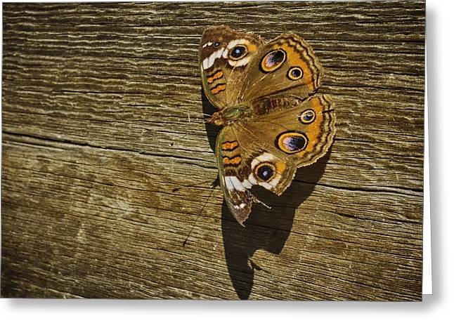 Common Buckeye With Torn Wing Greeting Card by Lynn Palmer