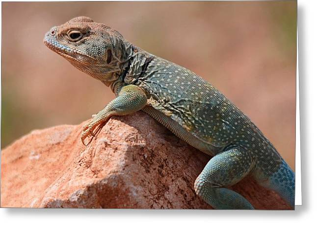 Common Collared Lizard Greeting Card by Elizabeth Budd