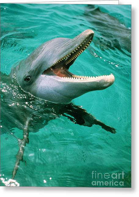 Common Dolphin Dolphinus Delphis Greeting Card by Art Wolfe