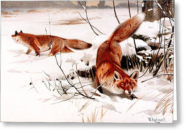 Common Fox In The Snow Greeting Card