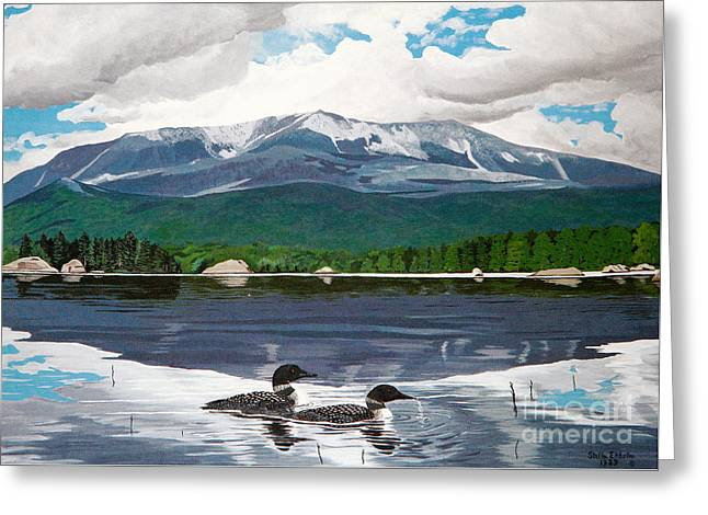Common Loon On Togue Pond By Mount Katahdin Greeting Card